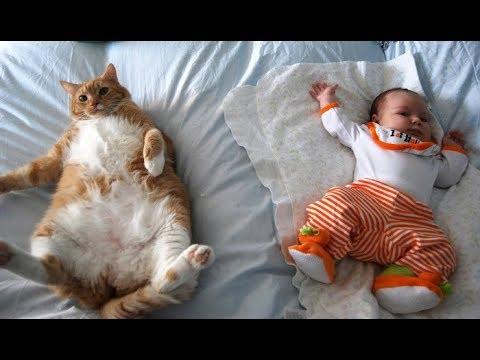 Kids with animal
