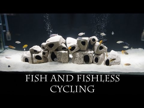 Fish and Fishless Cycling - Cycling your Aquarium Pt. 2