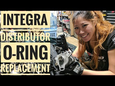 How to Replace Integra Distributor O-Ring (VLOG 15)