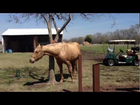Why Tie a Horse to a Tree when you have a Tie Post? - Rick Gore Horsemanship