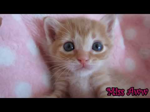 Cute Kitten Playing And Sleeping | Too Cute!
