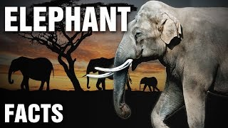 Everything You Need To Know About Elephants