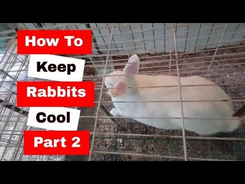 How to keep rabbits cool in the summer: Part 2