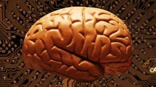 Explainer How Many Megabytes Does Your Brain Hold