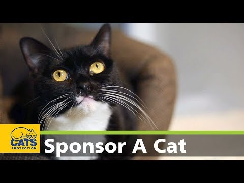 Pippa - Meet the Cats Protection Sponsor Cats series 2, episode 3
