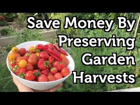 Preserve Garden Fruit and Vegetables 4 Easy Methods
