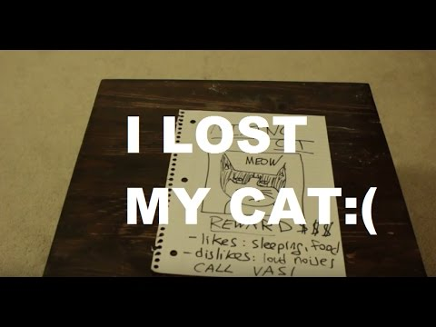 How to Find Your Lost Cat (short film)