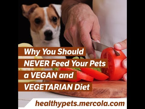 Why You Should NEVER Feed Your Pets a VEGAN and VEGETARIAN Diet