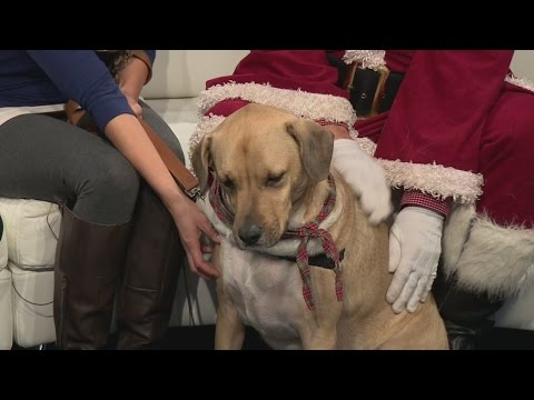 Pet of the Week: Andy