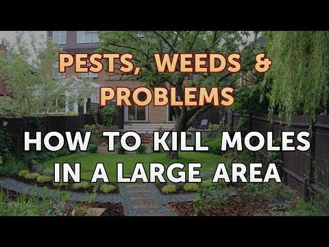 How to Kill Moles in a Large Area