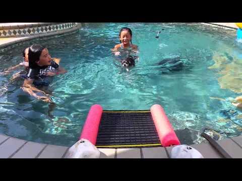 Blue's custom made small pool pet ramp