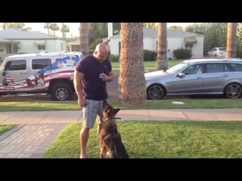 Arizona Off Leash Obedience Dog Training