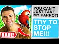 Rmaliciouscompliance You39re Gonna TAKE My RARE Parrot