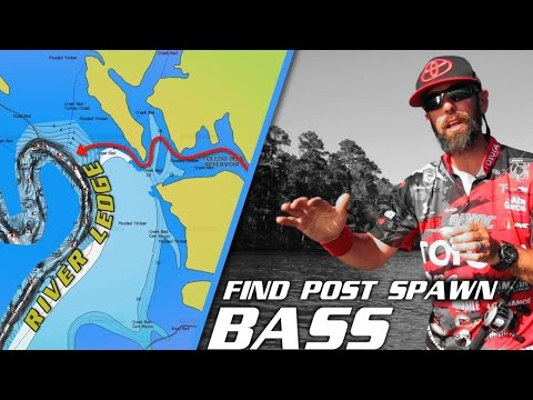 How to Find Bass in the Post Spawn Transition