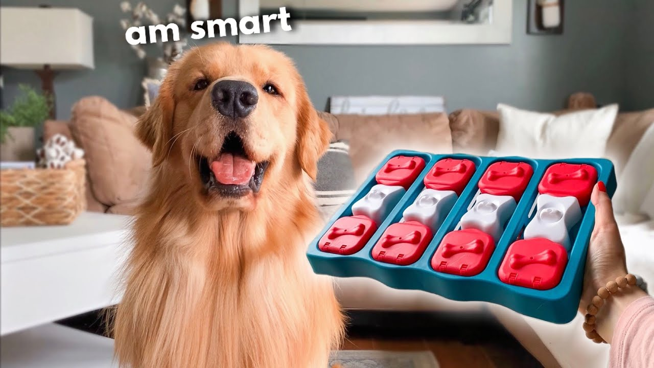 My Dog Tries Quarantine Brain Game