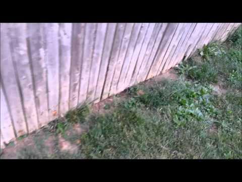 My Backyard - No Holes!