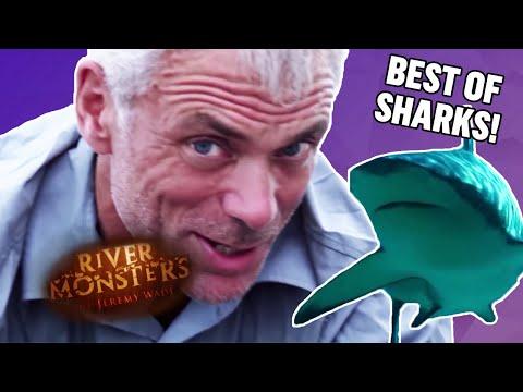 Best of Sharks - River Monsters