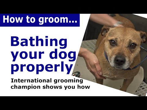 How to bath a dog - dog grooming demonstration