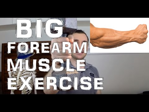 How to Workout the Brachioradialis Muscle for Bigger Forearms