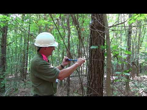 Determining the age of a tree with an increment borer