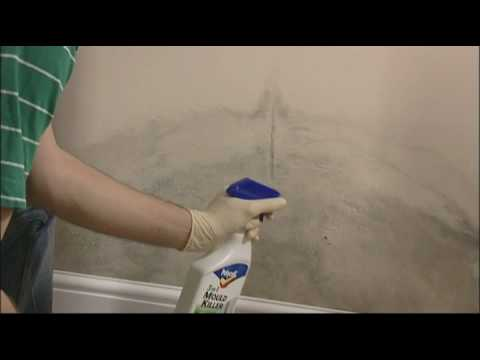 How to remove mould from walls and ceilings