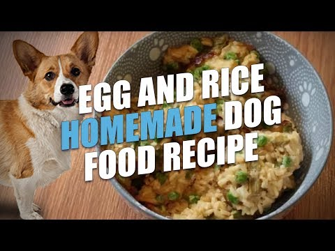 Egg and Rice Homemade Dog Food Recipe (Cheap and Healthy)