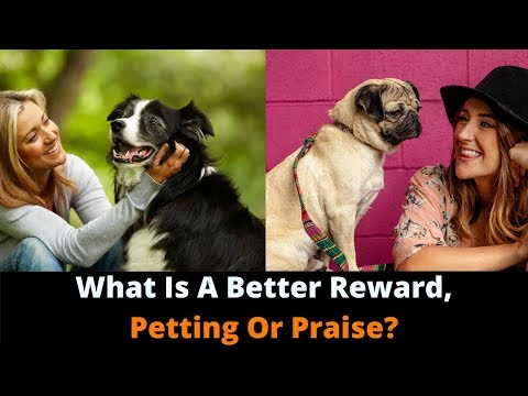 Should You Pet Or Praise Your Dog As A Reward? Which One Do They Enjoy More?