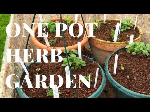 How to: create a ONE POT herb garden (windowsill / patio gardening)