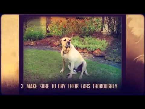 Remedies to Prevent Dog Ear Infections