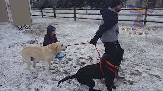FUNNIEST DOGS in SNOW COMPILATION - Haven