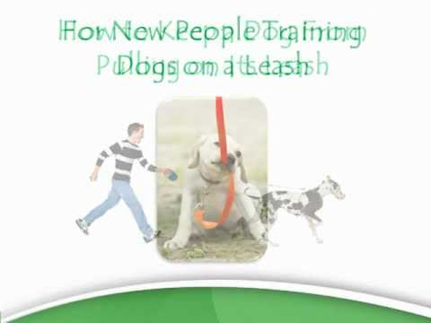 Dog Pulling On Leash - Tips To Stop Leash Pulling