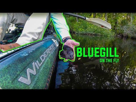 Kayak Fishing - Big Bluegill on the Fly