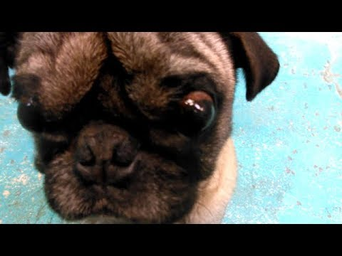 Frank-Adoptable Doggie at HSSAZ on 1-16-18