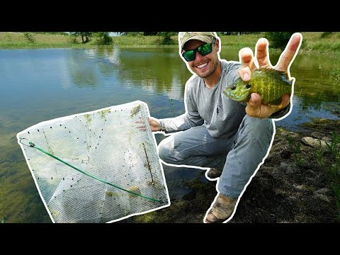Using Homemade Fish Trap to Stock My Pond