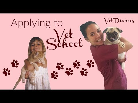 Applying to VET SCHOOL | Vet Diaries