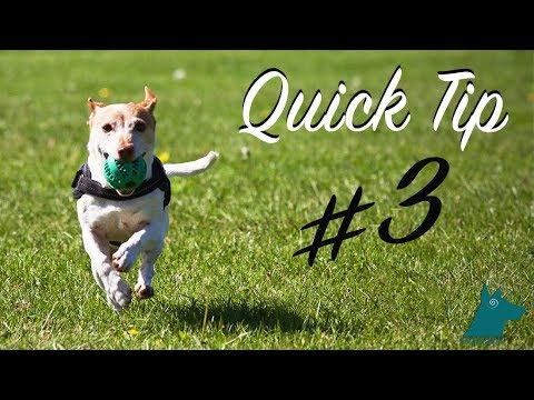 Quick Tip #3: Fighting Over Items at the Dog Park