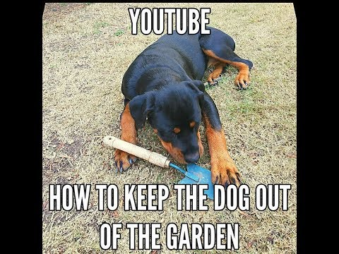 How we keep the dog from digging in our garden- for cheap!