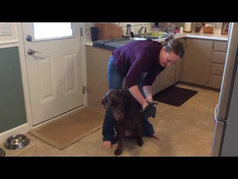 Pet Mitt and Pet Towel - Kara Sternquist: Norwex Independent Sales Consultant