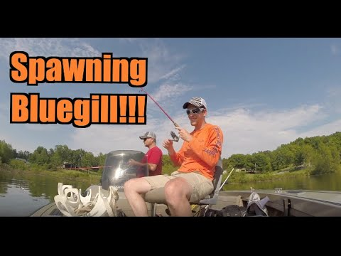 Bluegill Fishing on the Beds