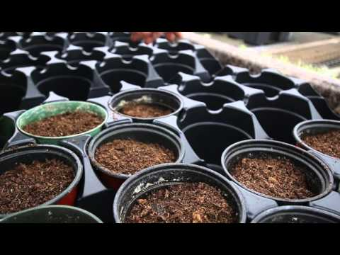 Greenhouse Winter Preparations