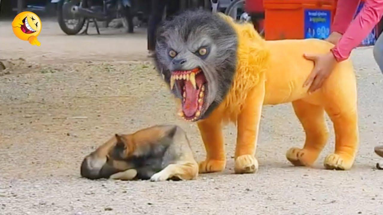 Troll Prank Dog Funny & fake Lion and Fake Tiger Prank To dog & Huge Box Prank to dog