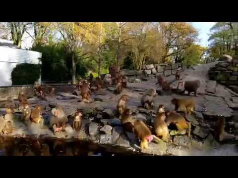 Mokey Feeding Zoo Emmen