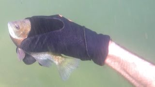 Catching Fish By Hand Underwater: Hold My Breath For 3 Minutes! Fishing, Herping, Nature, 4K.
