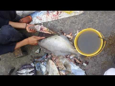 Unicorn Leather Jacket File Fish Cutting | Irani Paplet Karachi Fish Harbour