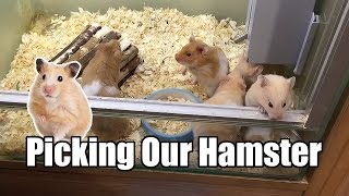 Buying Our First Pet Hamster - Woody the Hamster