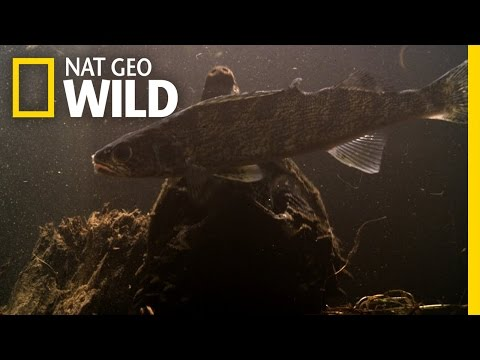 Fishing With Alligator Snappers | Wild Mississippi