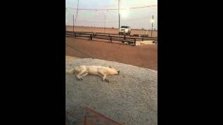 See how a dog responded to adzan