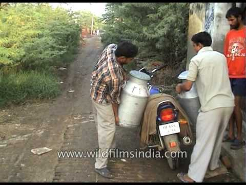 Village dairy industry: milk being sold and transported by scooter