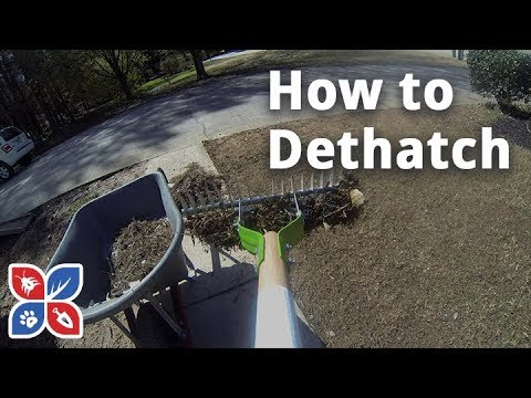 Do My Own Lawn Care - E9 - How to Dethatch