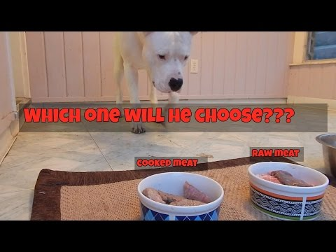 Raw Food Diet for Dogs vs Cooked